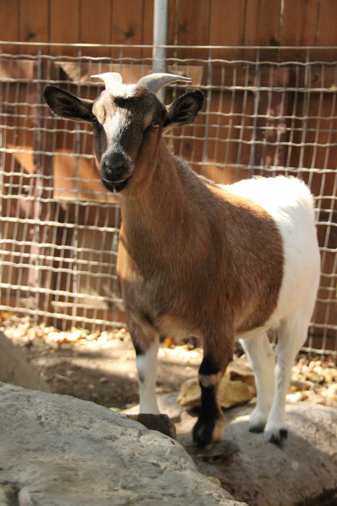 Averleigh ( Female )